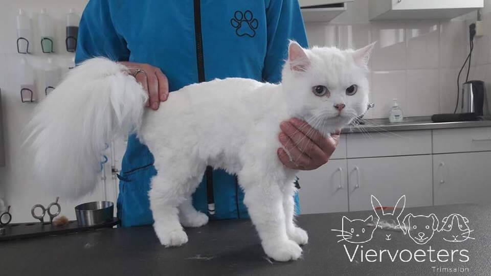 Nunu kat na het scheren