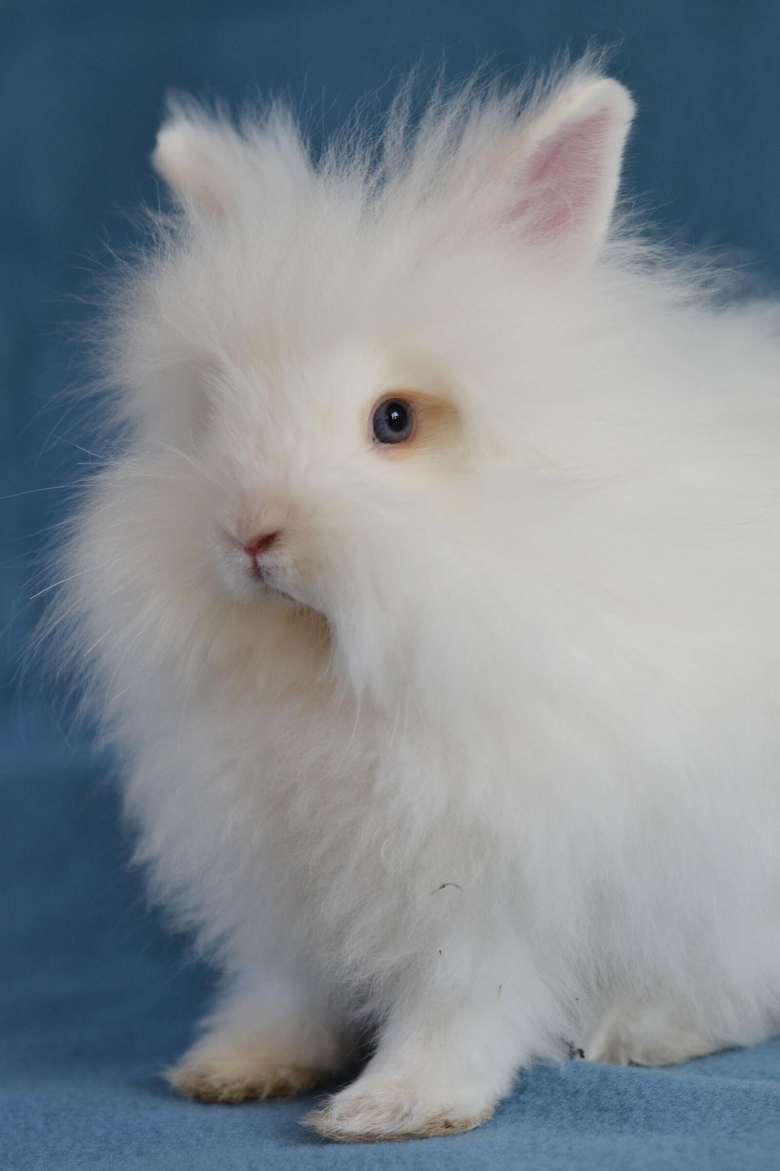 Foto van ons konijn Snowy, een goed voorbeeld van een knipbaar konijn